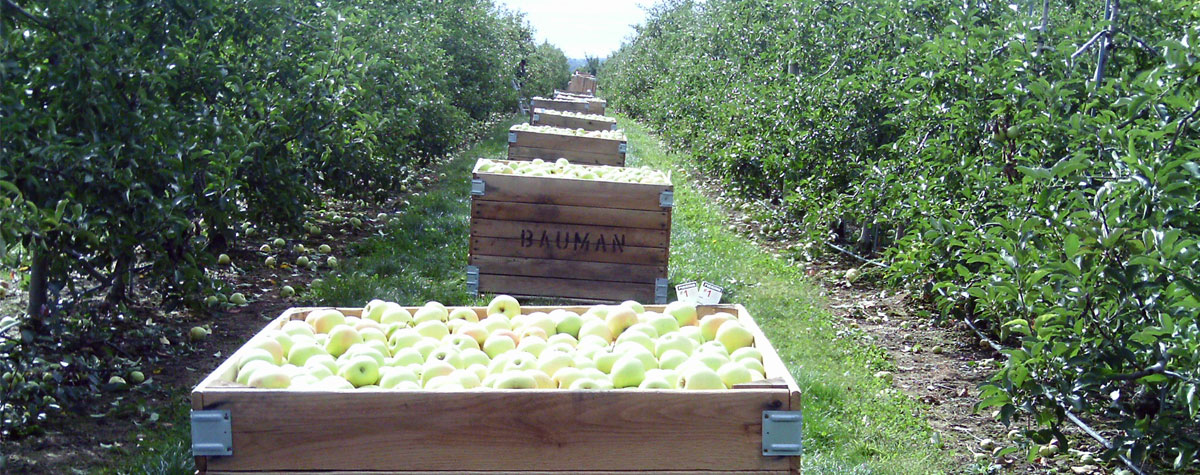 Bauman Apple Orchard