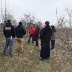 Bauman Orchards - Tree Pruning